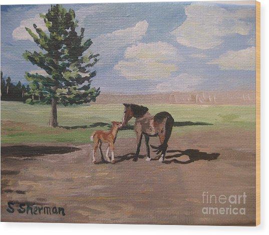 Springtime Foal Wood Print
