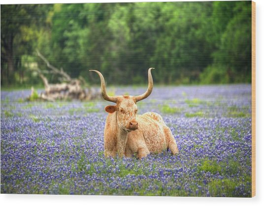 Springtime In Texas Wood Print