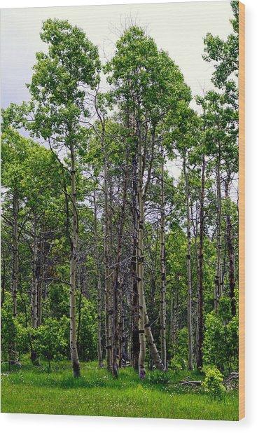 Springtime In The Sierras Wood Print by Lynn Bawden
