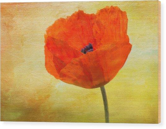 Springtime Poppy Beauty Wood Print