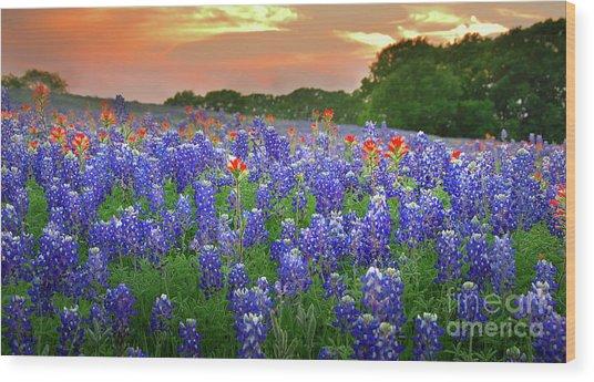 Springtime Sunset In Texas - Texas Bluebonnet Wildflowers Landscape Flowers Paintbrush Wood Print