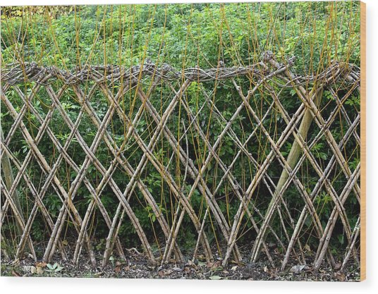 Sprouting Willow Fence Wood Print by Bob Gibbons