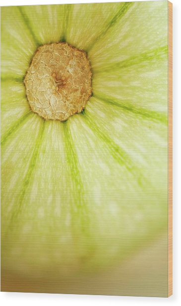 Squash (cucurbita Pepo) Wood Print by Maria Mosolova/science Photo Library