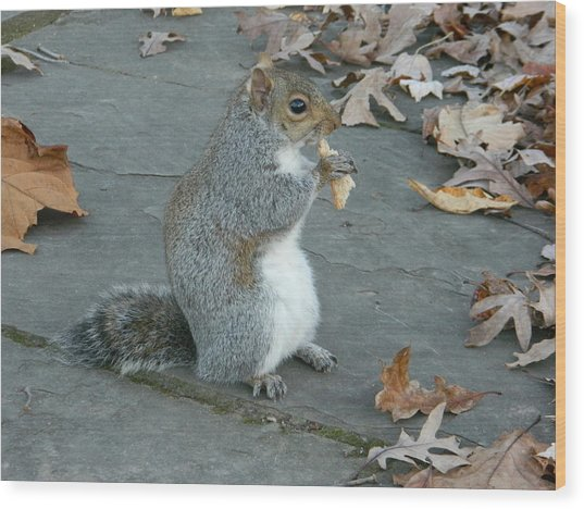 Squirrel Chomping On Bread Wood Print