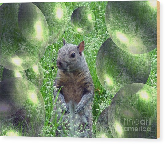 Squirrel In Bubbles Wood Print