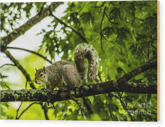 Squirrel On The Hunt Wood Print by Deborah Smolinske
