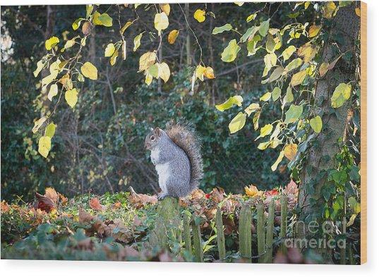 Squirrel Perched Wood Print