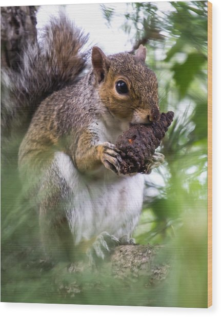 Squirrel With Pine Cone Wood Print