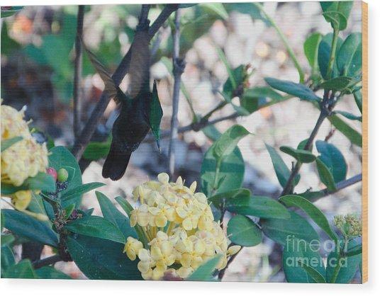 St. Lucian Hummingbird Wood Print