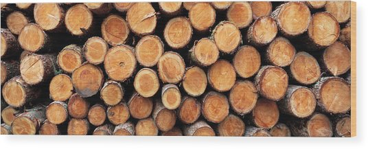 Stack Of Logs In Forest, Burrator Wood Print