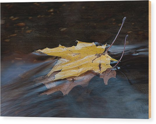 Stacked Autumn Leaves On Water Wood Print