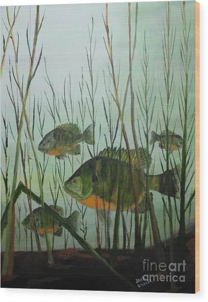 Stacked Blue Gills Wood Print