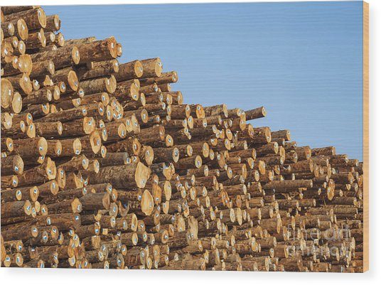 Stacks Of Logs Wood Print