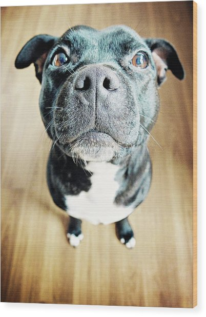 Staffordshire Bull Terrier Wood Print by Michelle Mcmahon