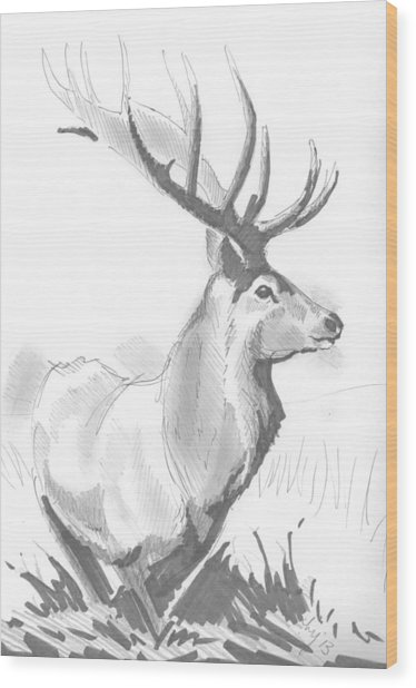 Stag Drawing Wood Print