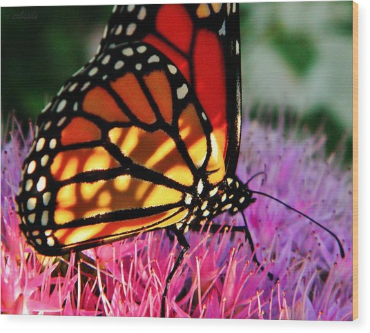 Stained Glass Monarch  Wood Print