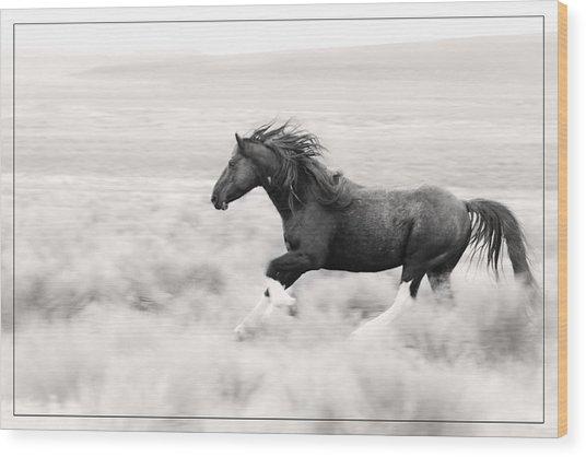 Stallion Blur Wood Print