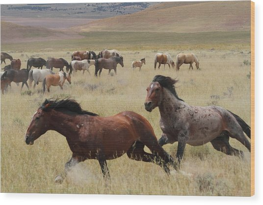 Stallion Chase Wood Print