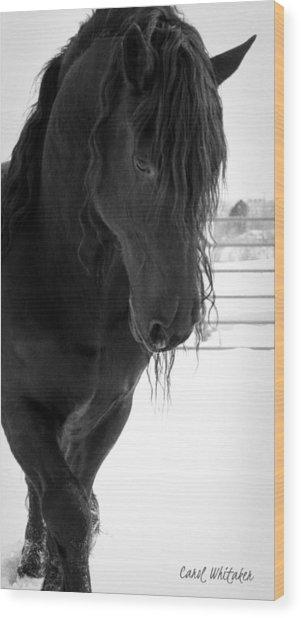 Stallion Essence Wood Print