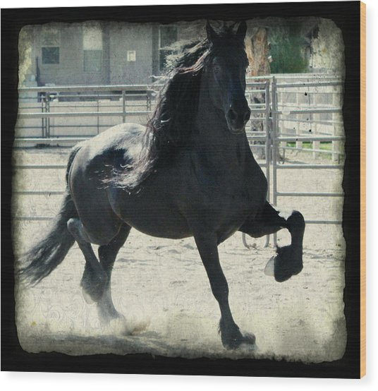 Stallion In Motion Wood Print