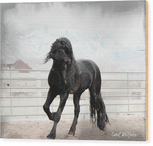 Stallion Magic Wood Print