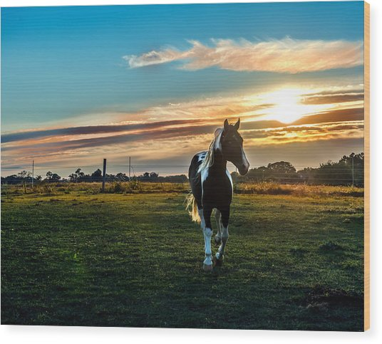 Stallion Sunset Wood Print