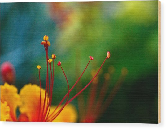 Stamen And Pistil Wood Print