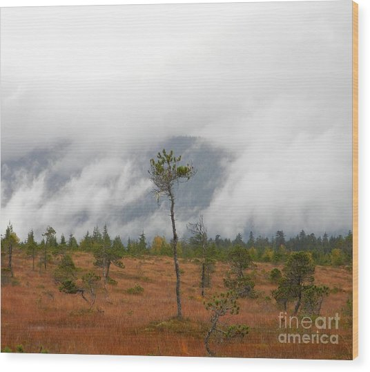 Wood Print featuring the photograph Stand Alone by Laura  Wong-Rose