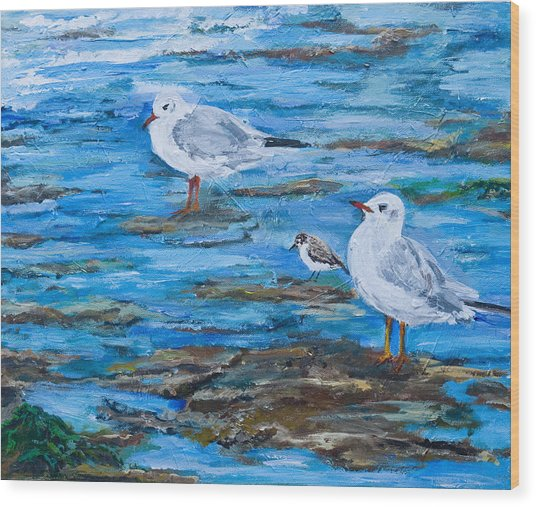 Sea Birds Wait Wood Print