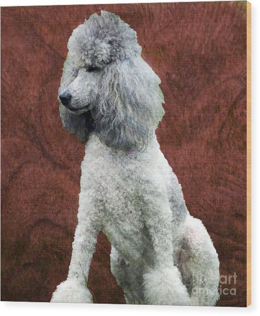 Standard Poodle Wood Print