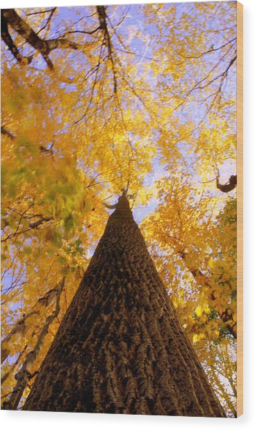 Standing Tall Wood Print