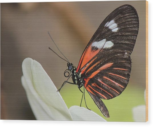 Standup Butterfly Wood Print