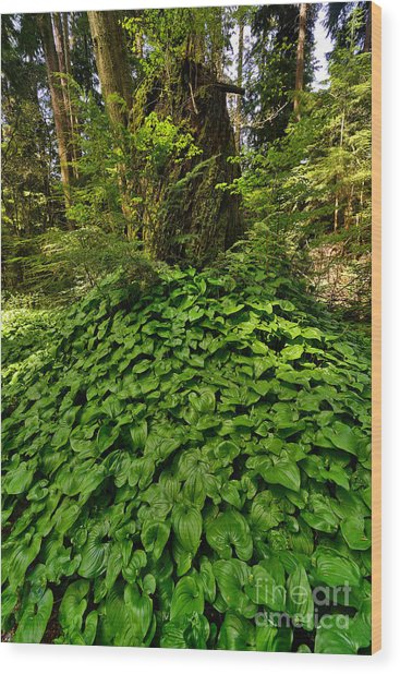 Stanley Park In Spring Time Wood Print by Terry Elniski