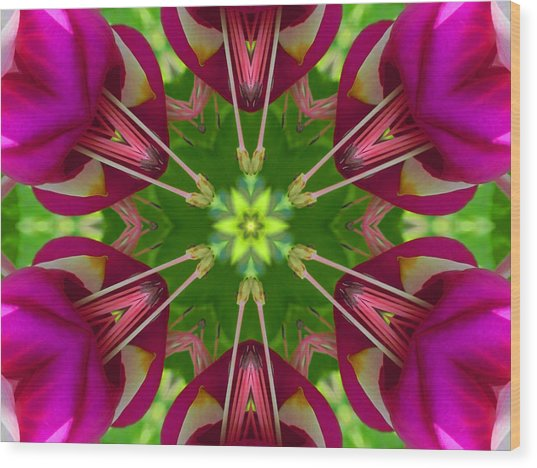 Star Fuchsia 1 Mandala Wood Print