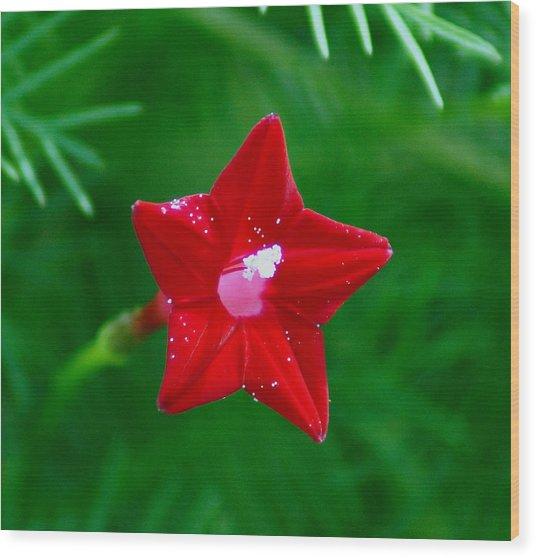 Star Glory Wood Print