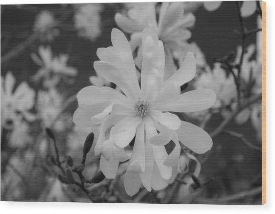 Star Magnolia Monochrome Wood Print by Priyanka Ravi