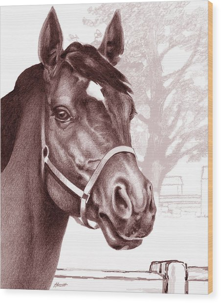 Stare Of The Stallion Wood Print by Patricia Howitt