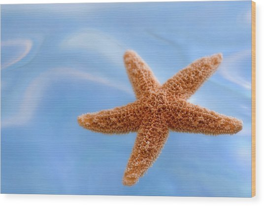 Starfish On Blue Water Wood Print