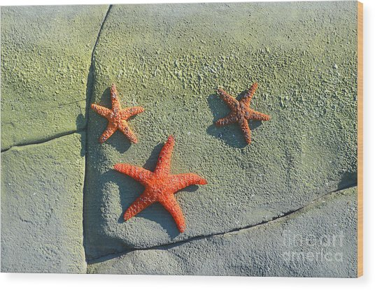 Starfish On The Rocks Wood Print