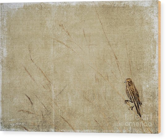 Starling In The Reeds Wood Print