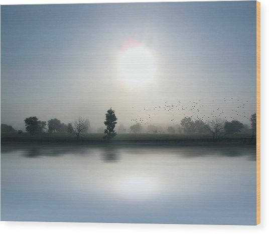 Starlings Misty Morning - Limited Edition Wood Print
