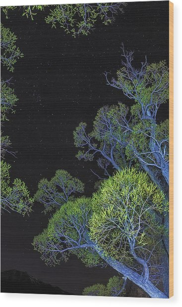 Stars Out Tonight Wood Print by Nancy Marie Ricketts