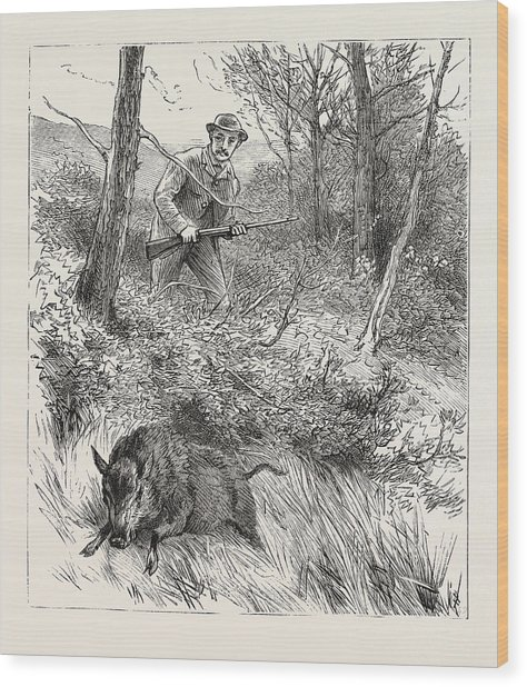 Starts A Pig While Looking For Woodcock Wood Print