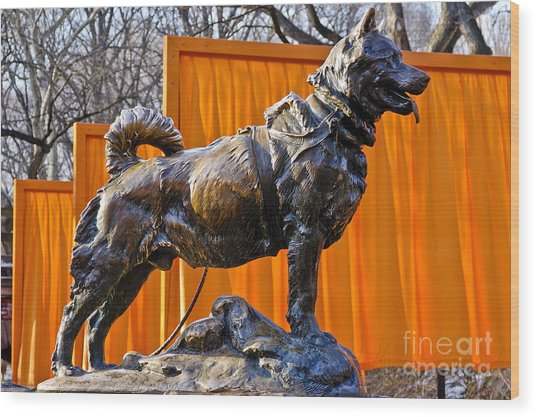 Statue Of Balto In Nyc Central Park Wood Print