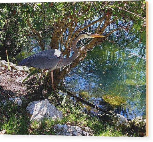 Stealthy Great Blue Heron Wood Print