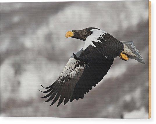 Stellar's Sea Eagle Wood Print