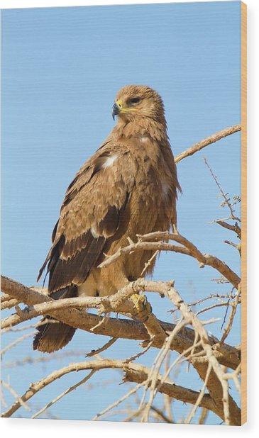Steppe Eagle (aquila Nipalensis) Wood Print by Photostock-israel