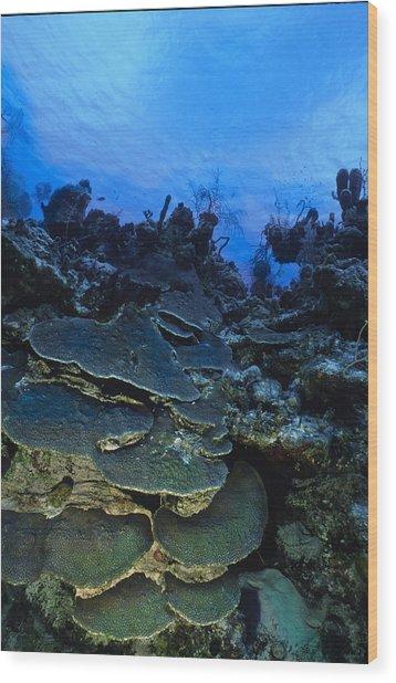 Steps Of The Sea Wood Print