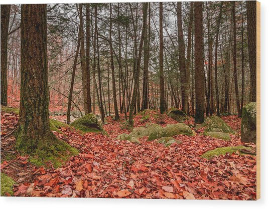 Stickney Brook Leaves Wood Print