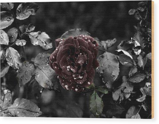 ...still A Rose Wood Print